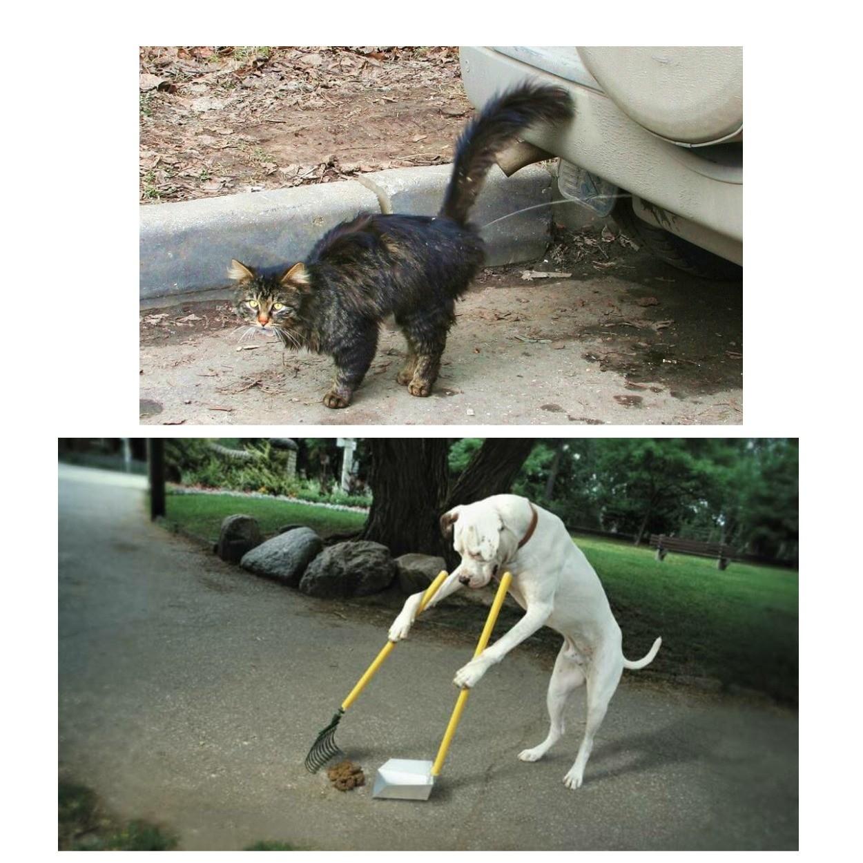 изображение испражнения домашних животных на тротуарной плитке