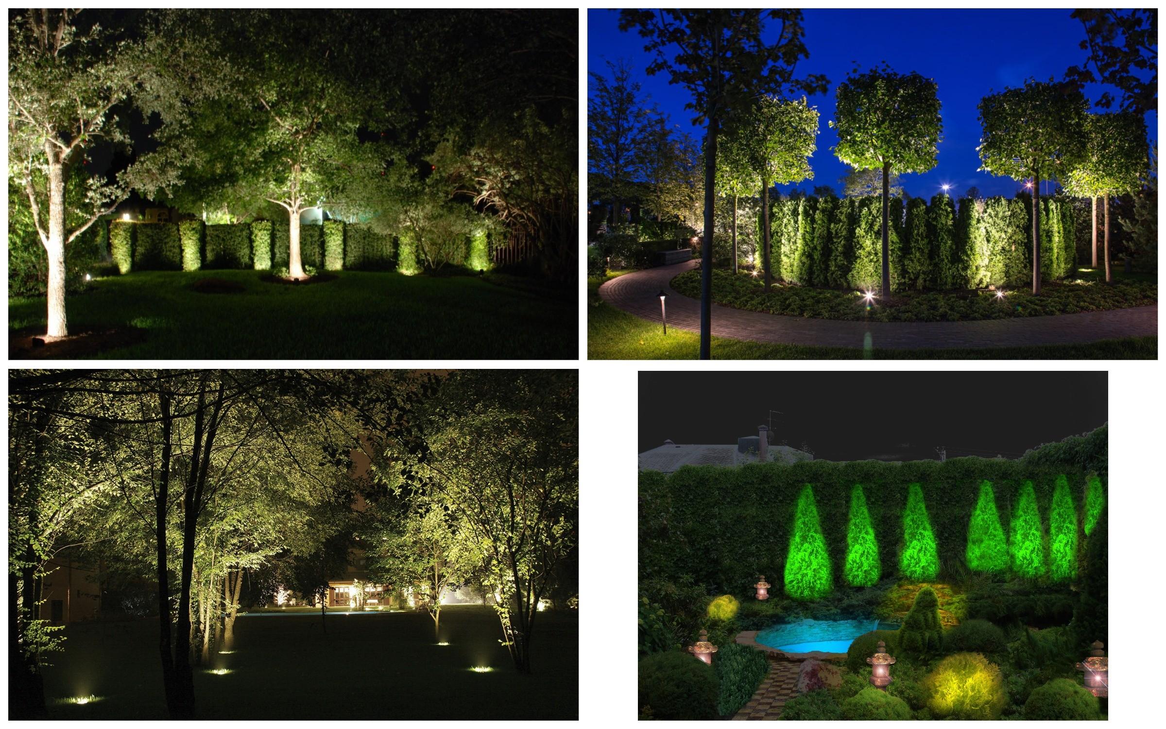 изображение подсветки деревьев