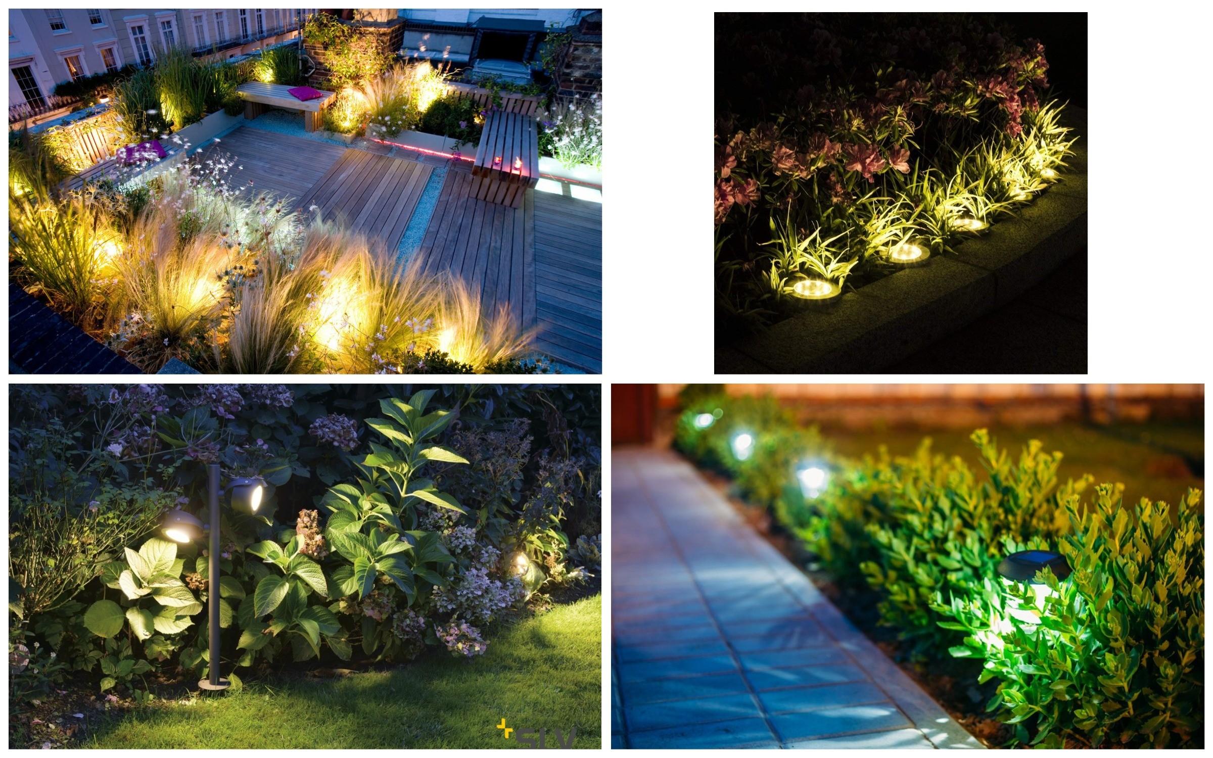 изображение освещения сада, растений и клумб