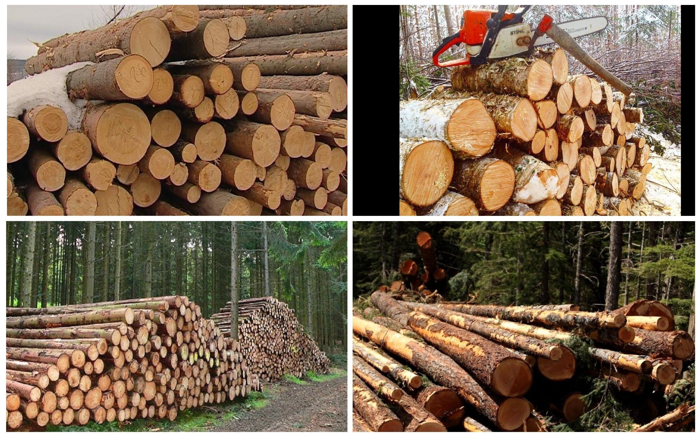 изображение заготовки деревьев в лесу