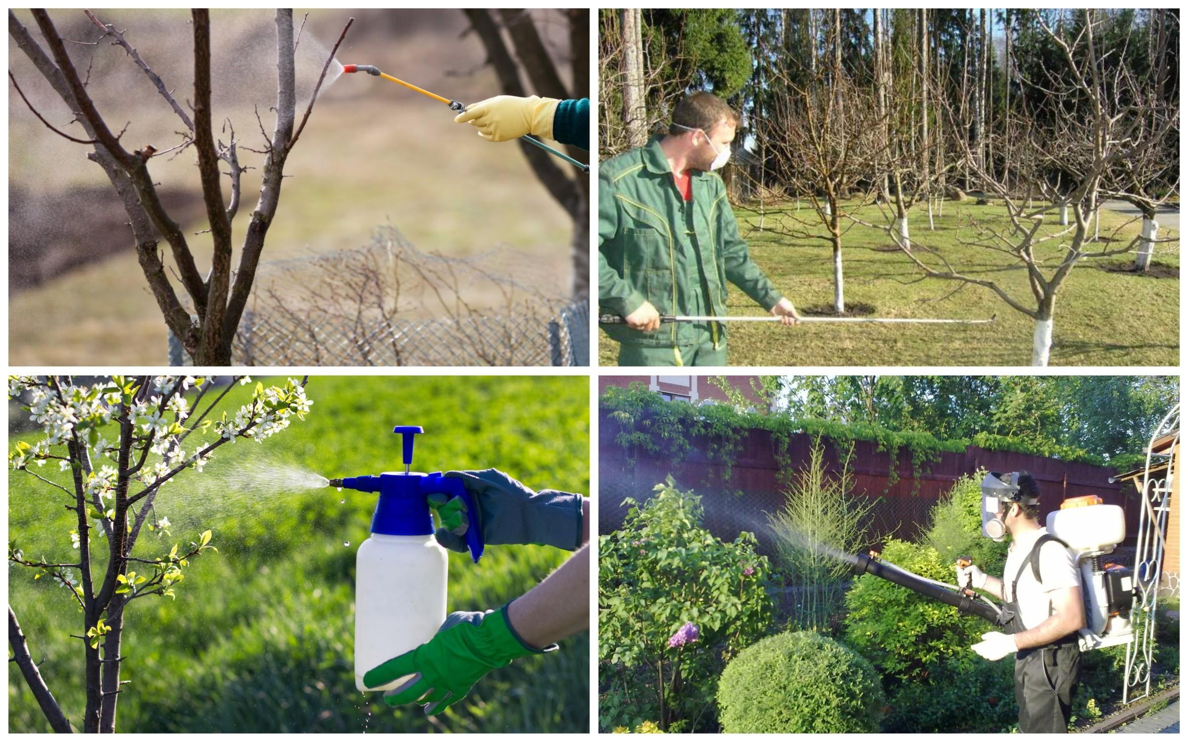 изображение обработки пестицидами стволов и кроны деревьев