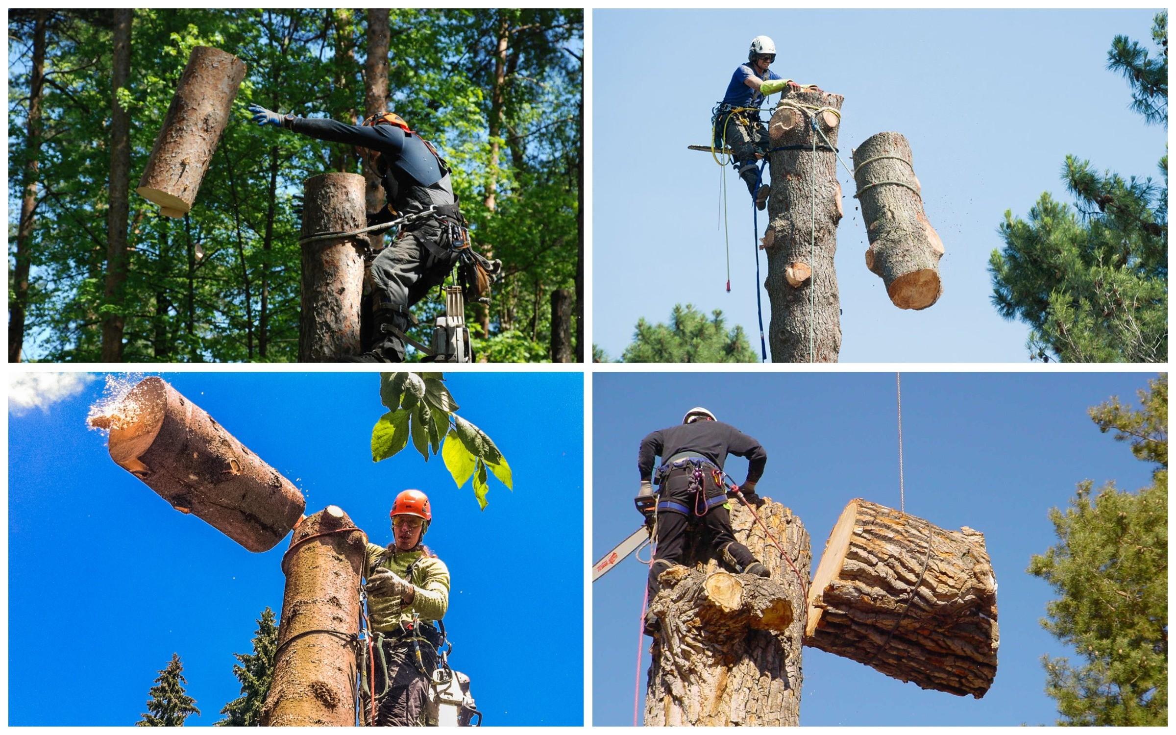 изображение метода спиливания дерева со сбросом