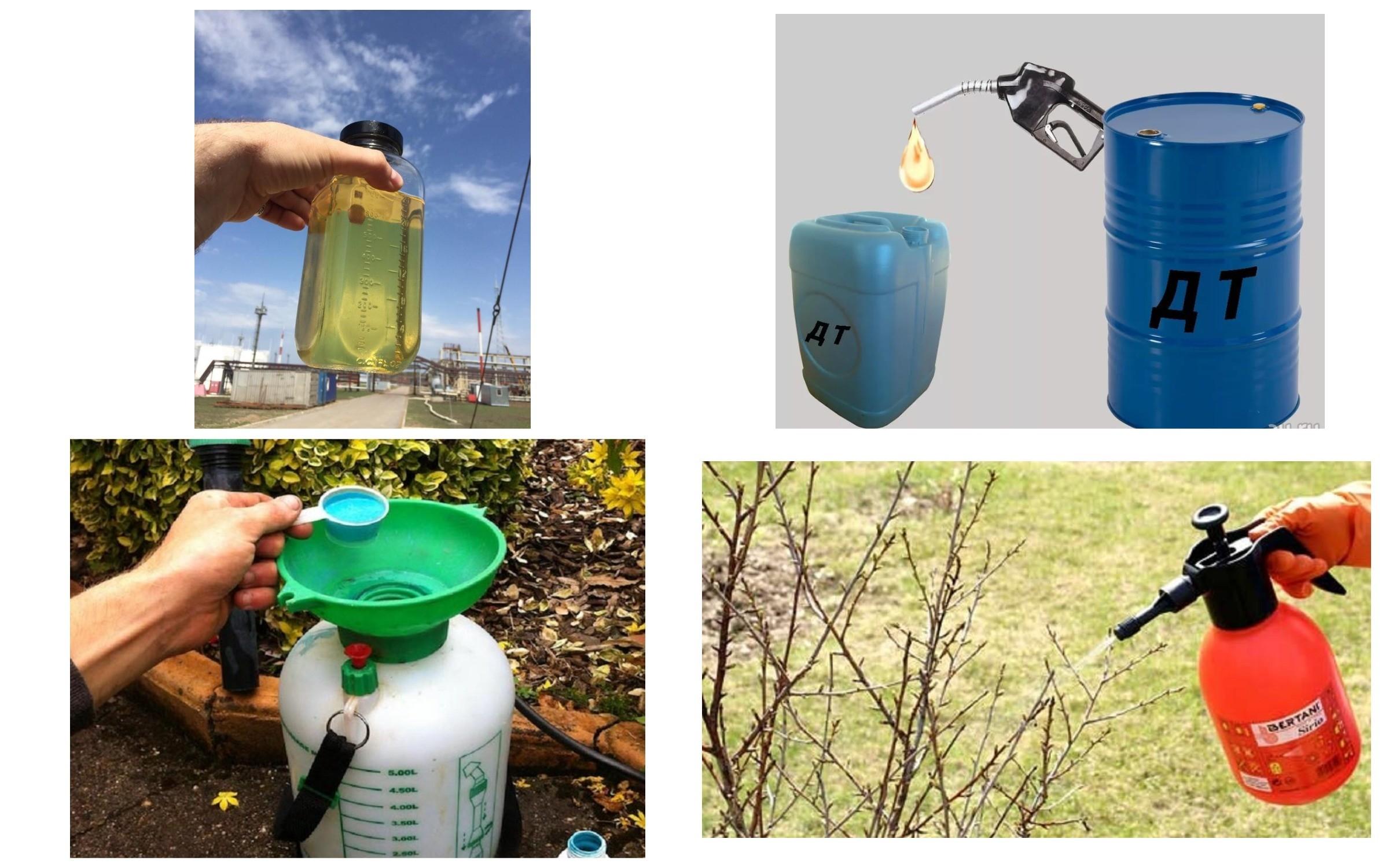 изображение опрыскивания соляркой деревьев