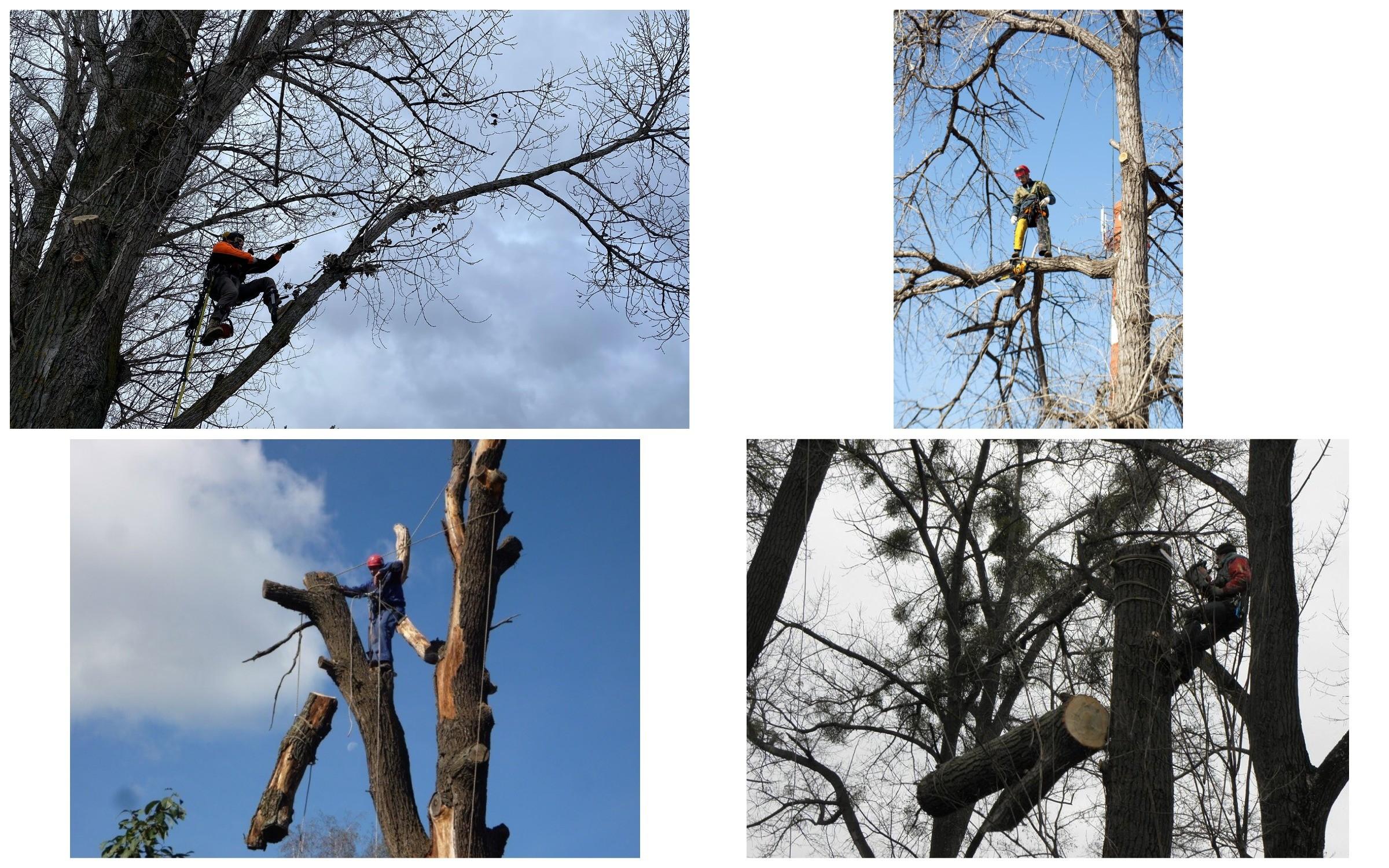 изображение метода спиливания дерева со спуском