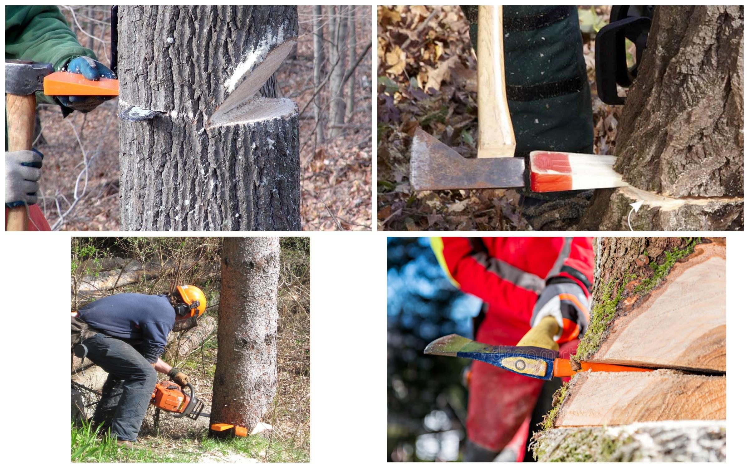 изображение спиливания дерева с помощью клина