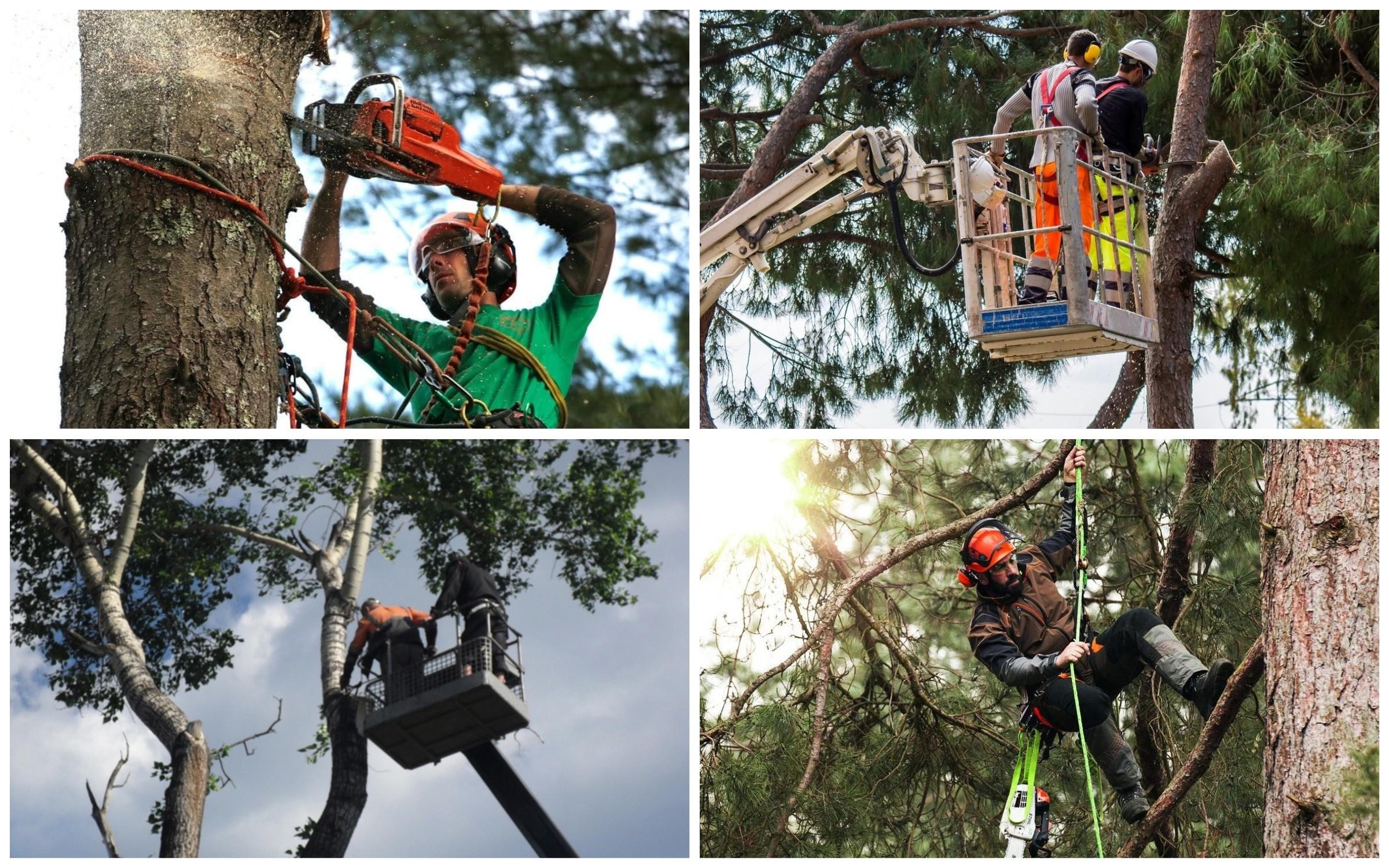 изображение спиливания дерева с помощью спецтехники: с автовышки или с помощью альпинистов