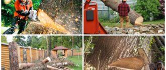 изображение спиливания дерева