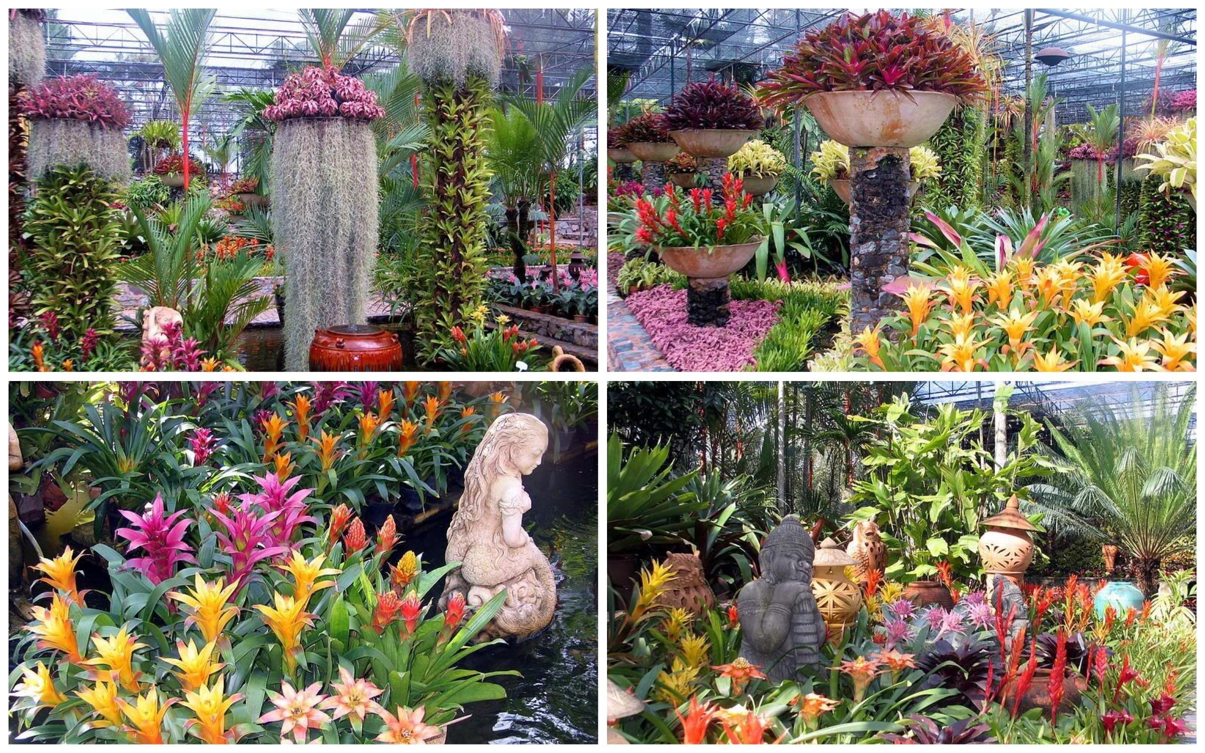 фото красивые растения в парке нонг нуч