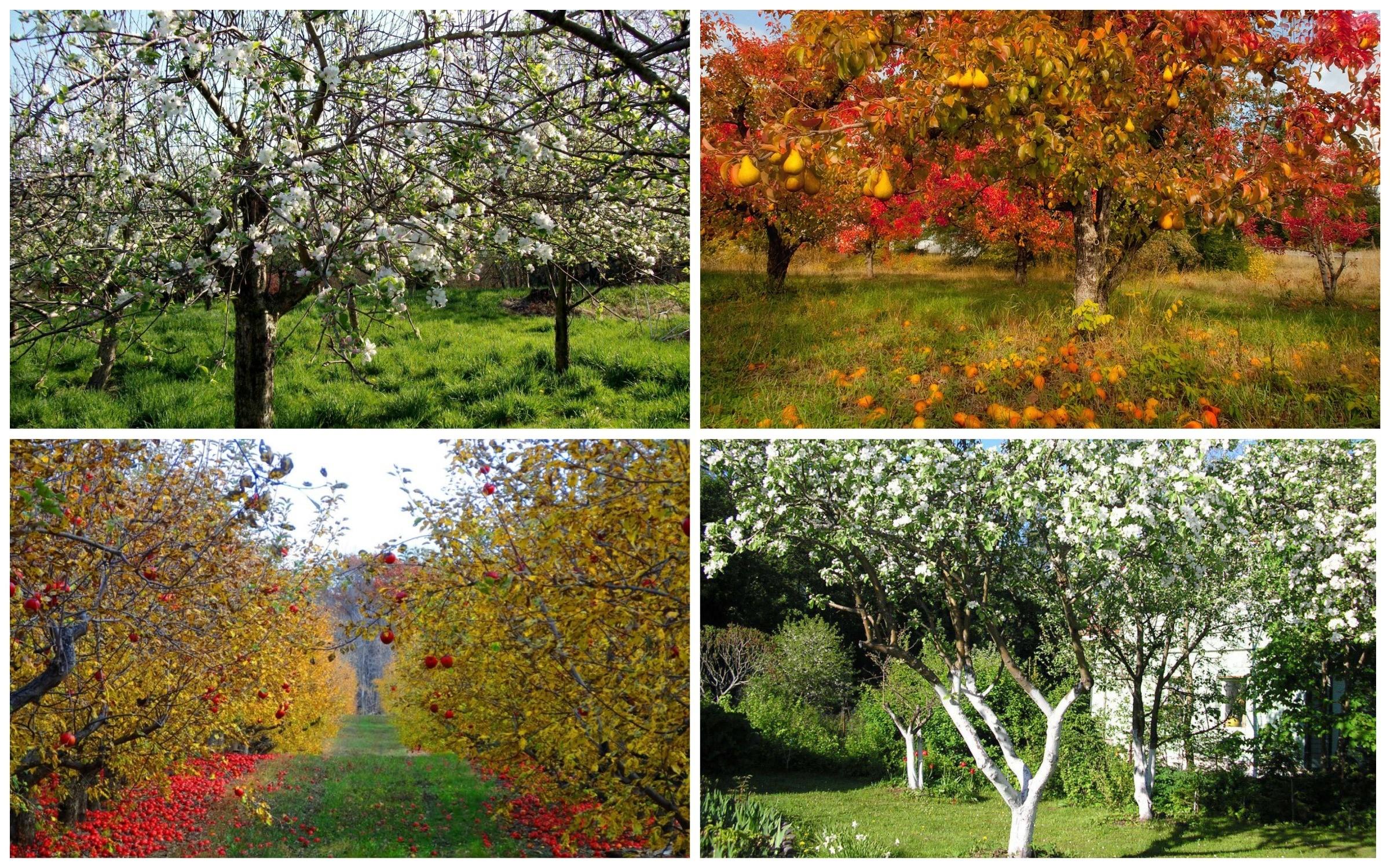 фото плодовые деревья весной и осенью