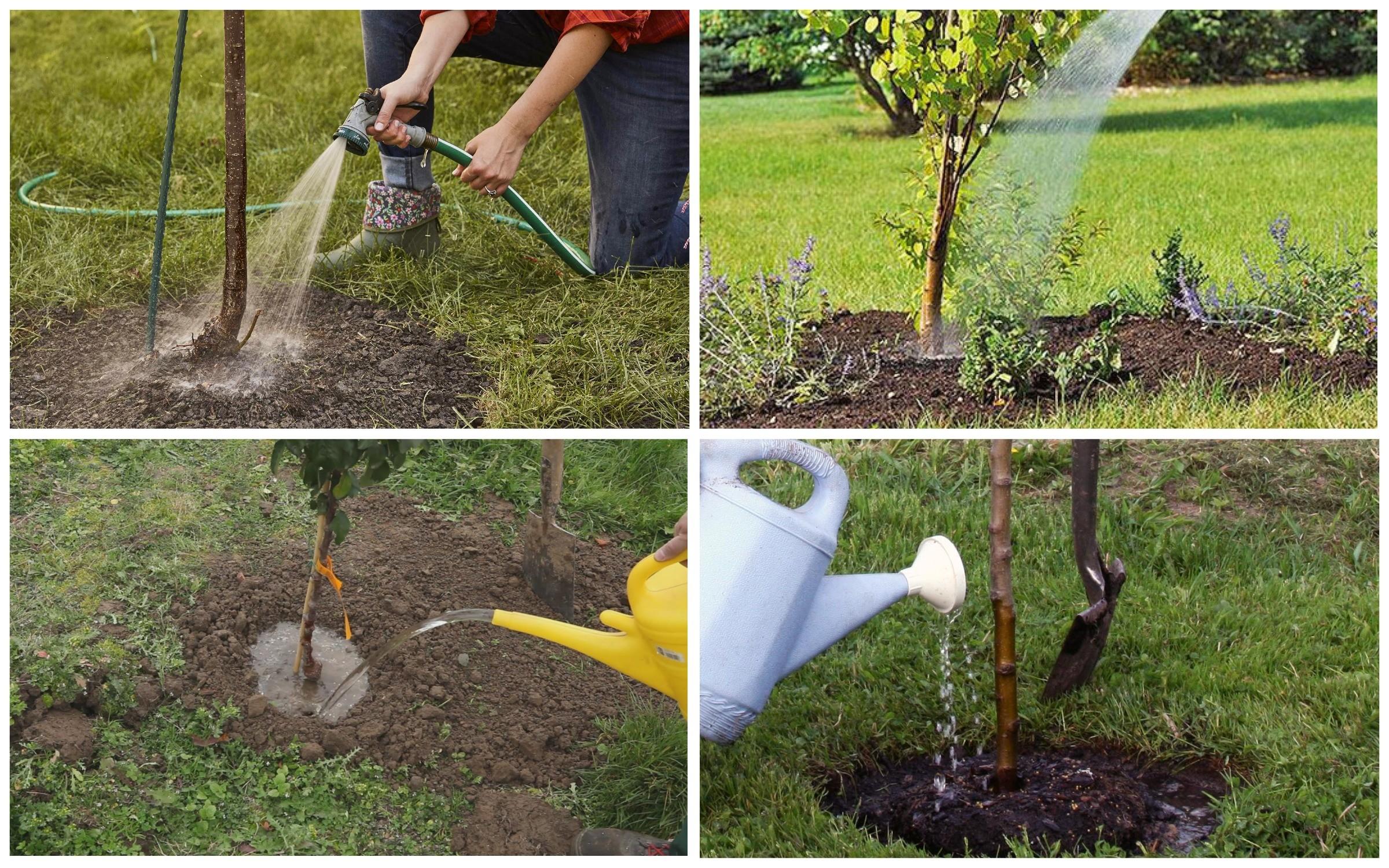 изображение полив плодовых деревьев