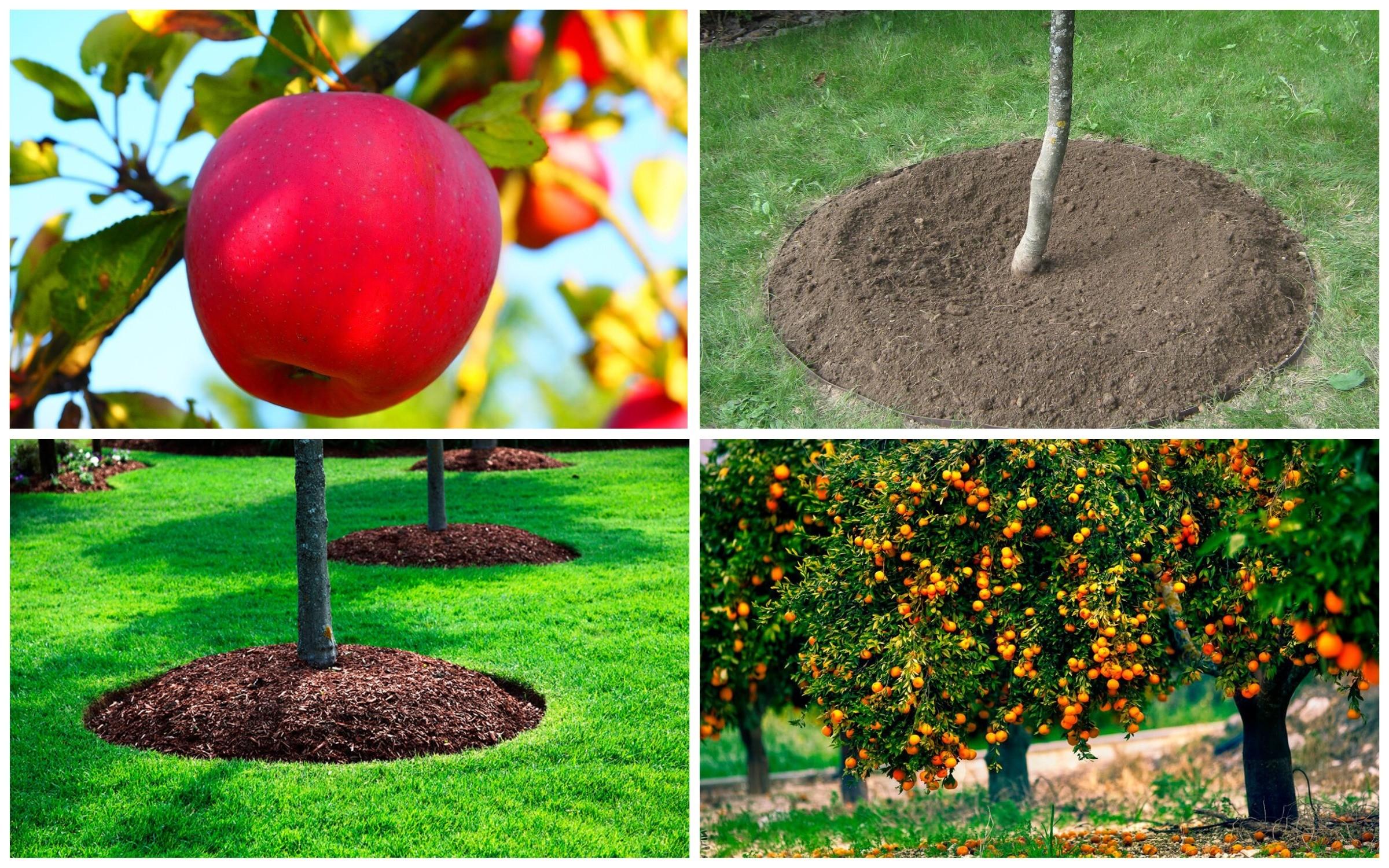 фото почва для плодородных деревьев