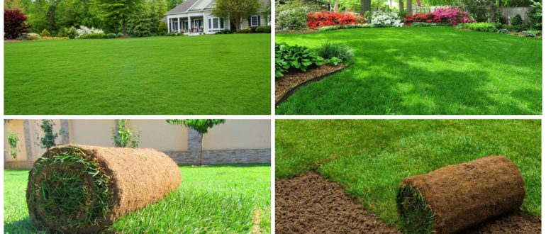 фото газонная трава на участке