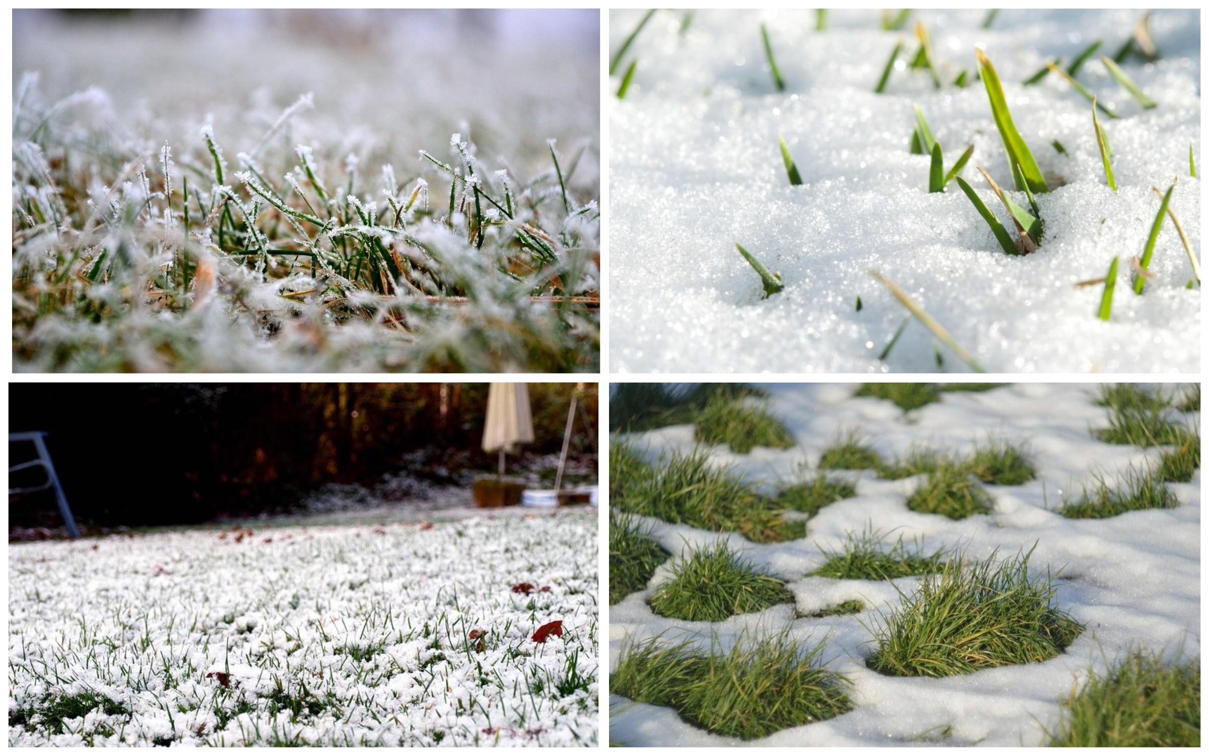 изображение газон Для регионов с холодными зимами
