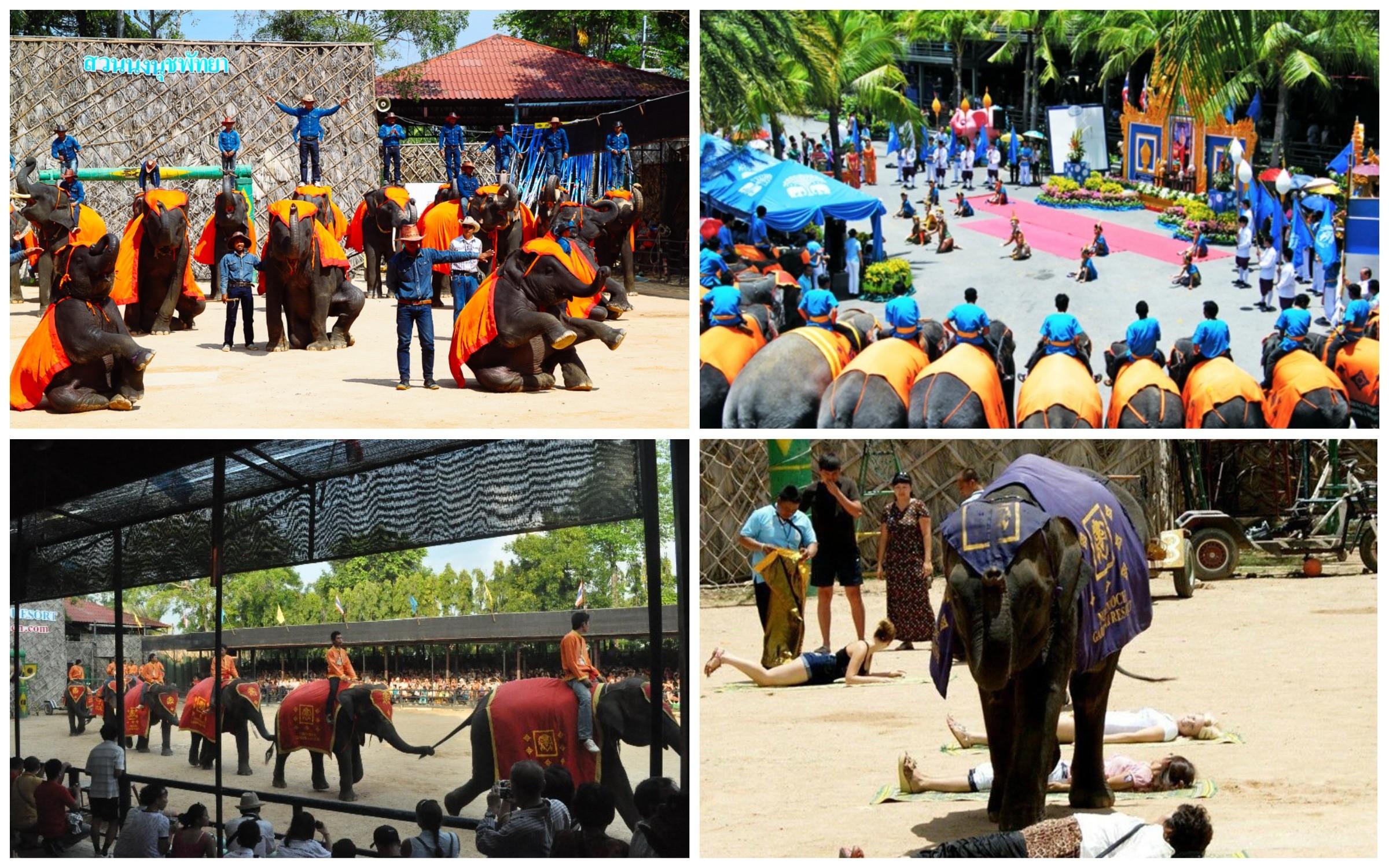 фото слоны в парке нонг нуч