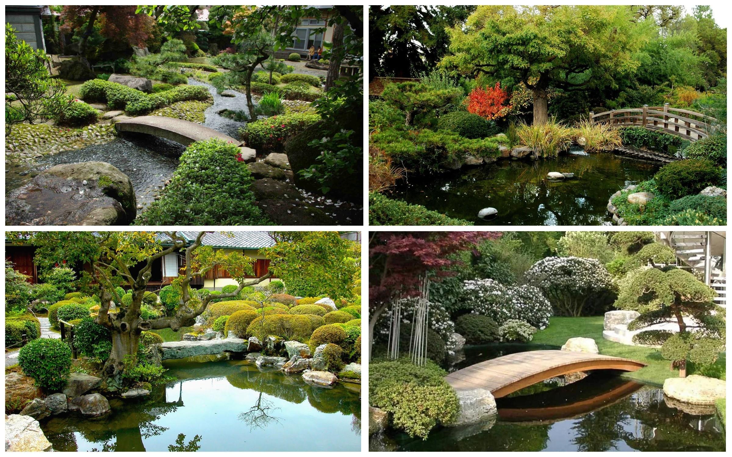 фото водные объекты в японском саду