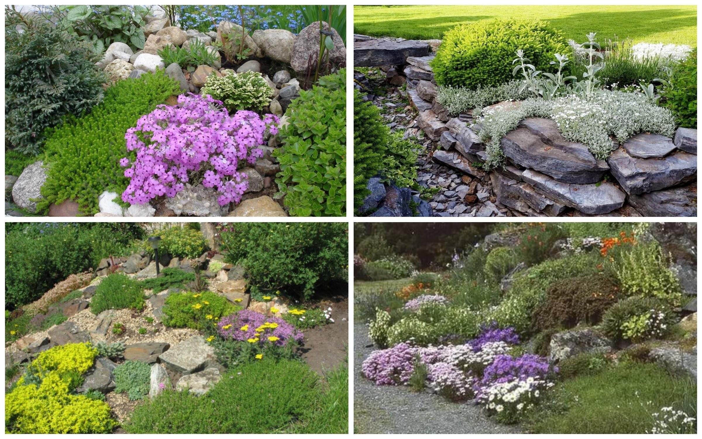 фотография рокарий Почвопокровные травы и цветы