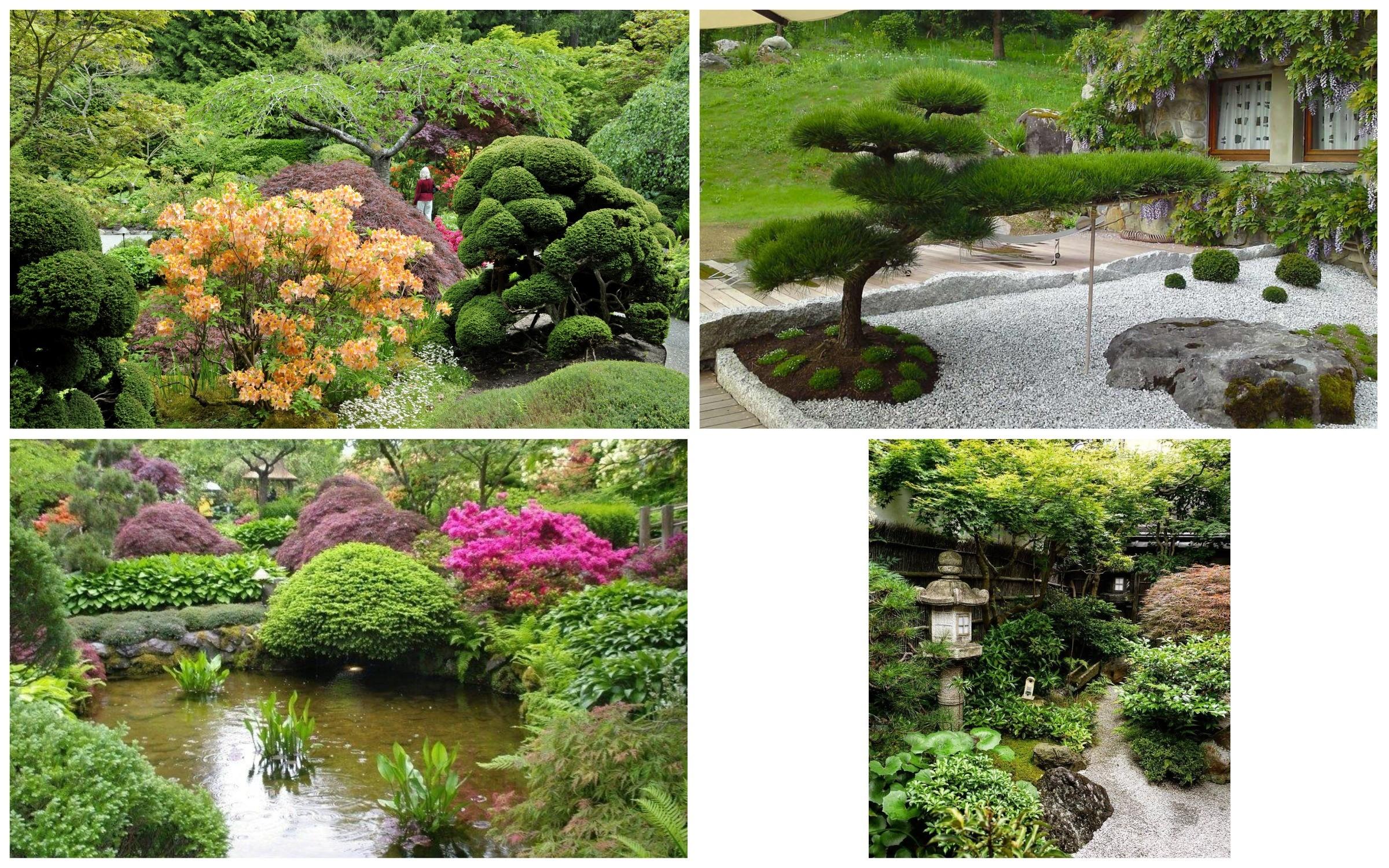 изображение растения в японском саду