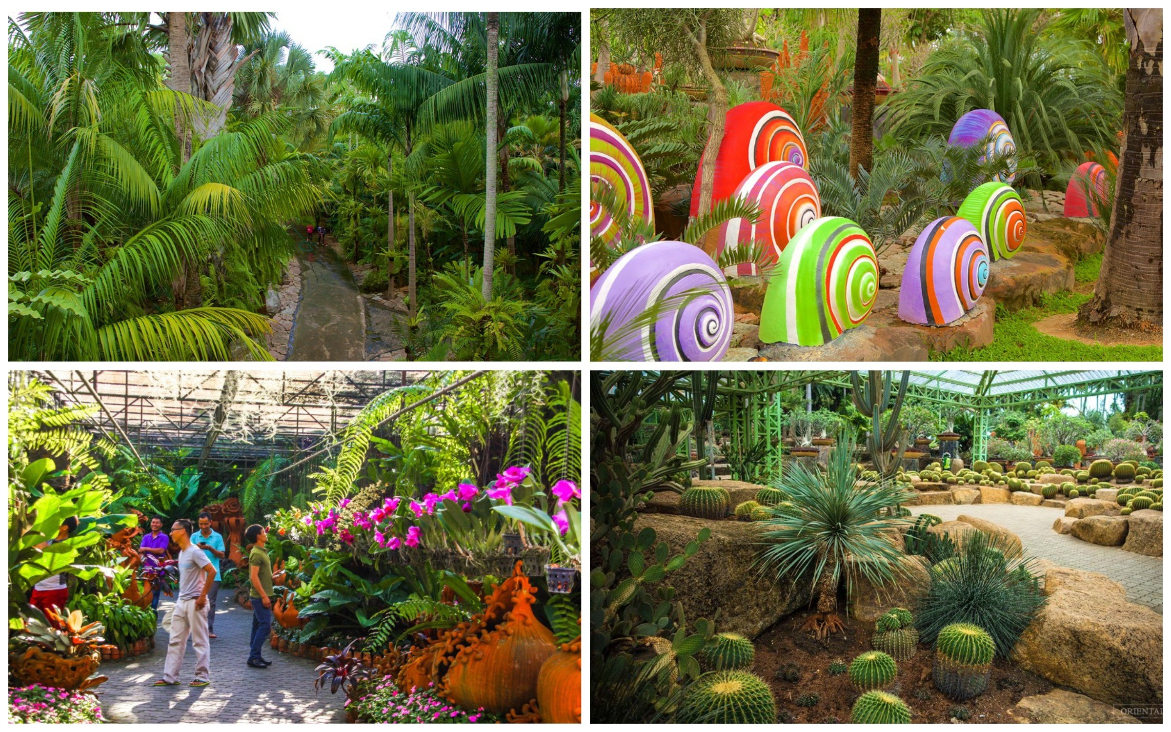 фото растения в парке nong nooch