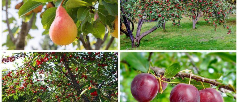 фото плодовые деревья в саду