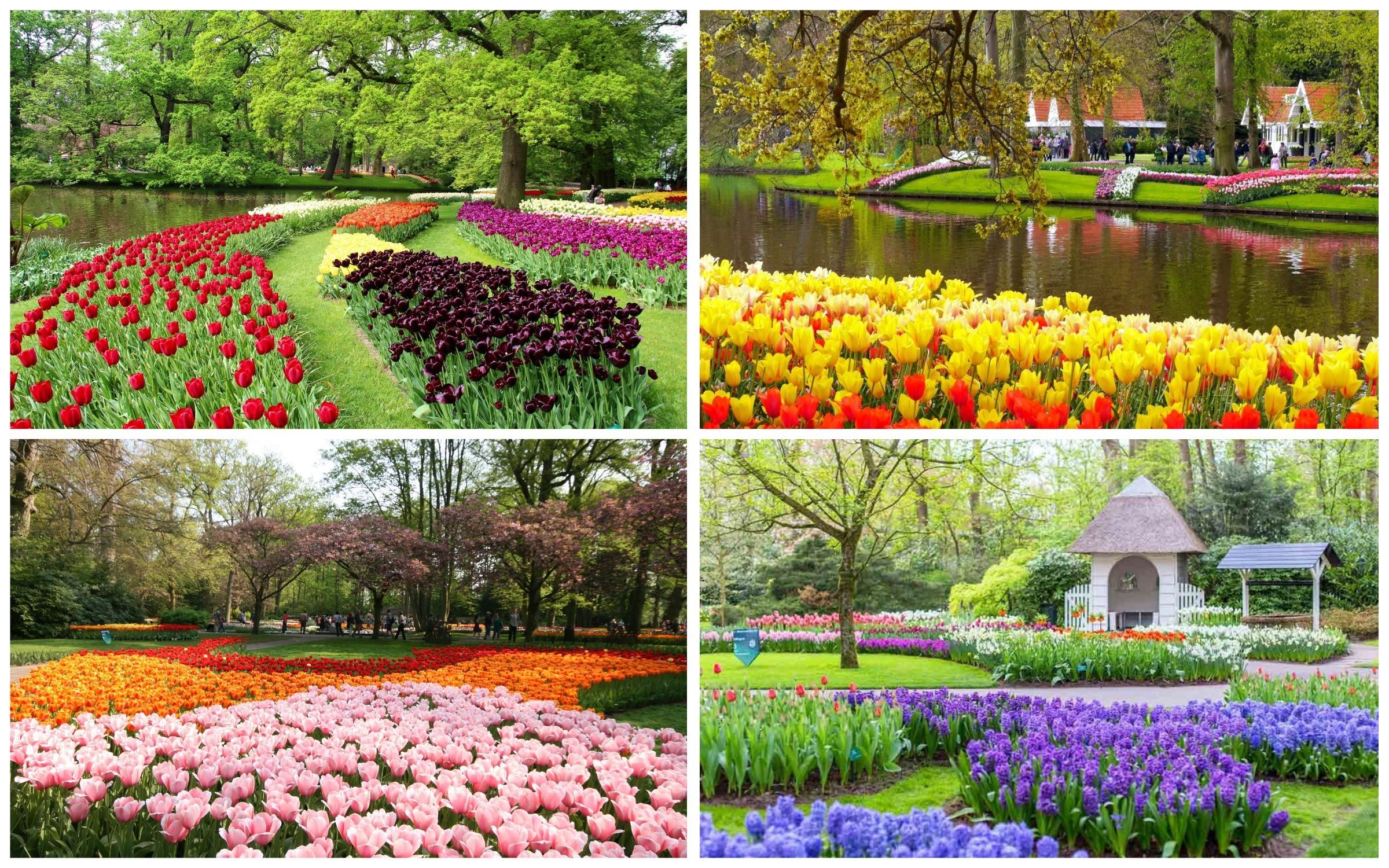 фото цветочный сад Кёкенхоф