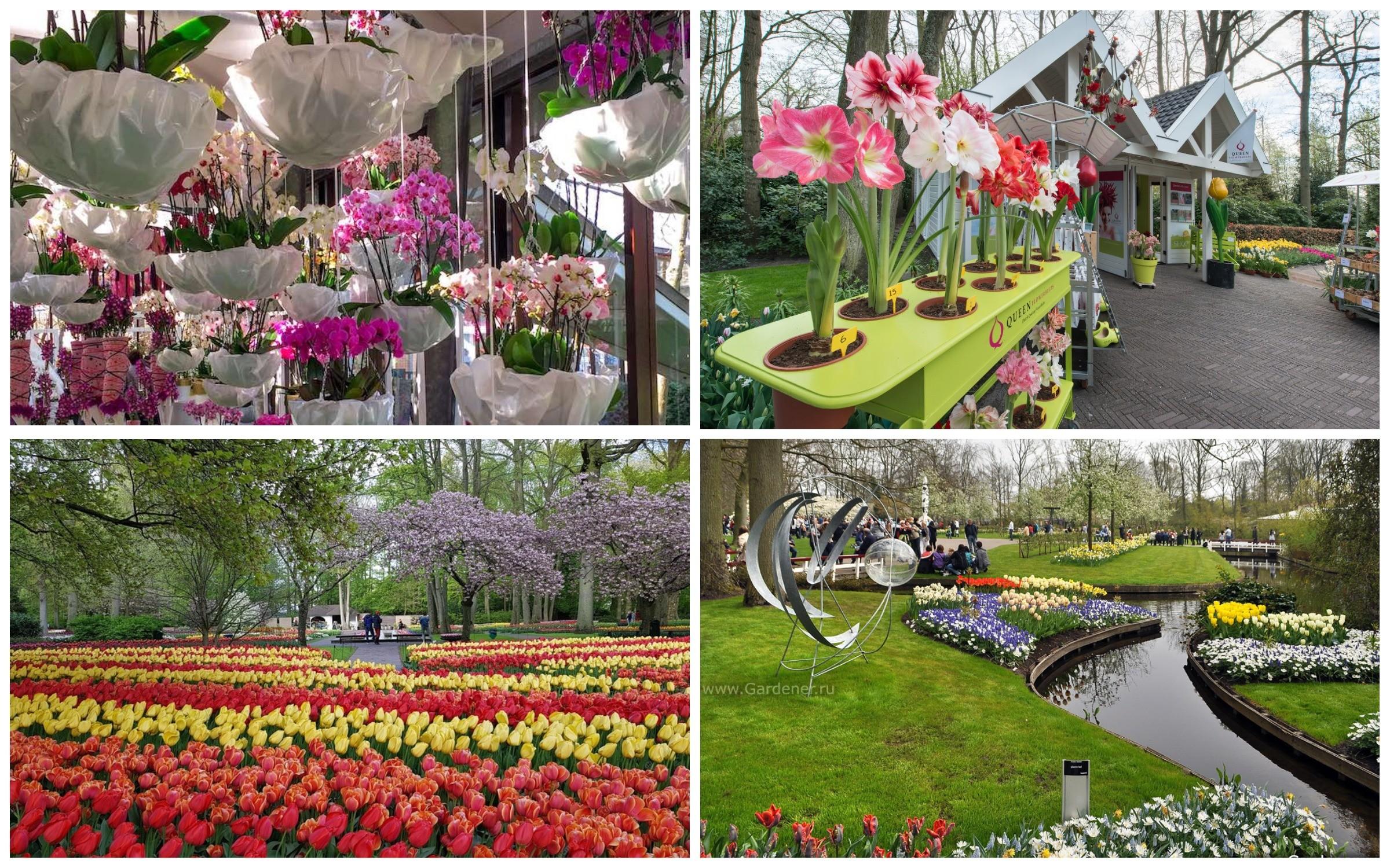 фото цветочный павильон Кёкенхоф