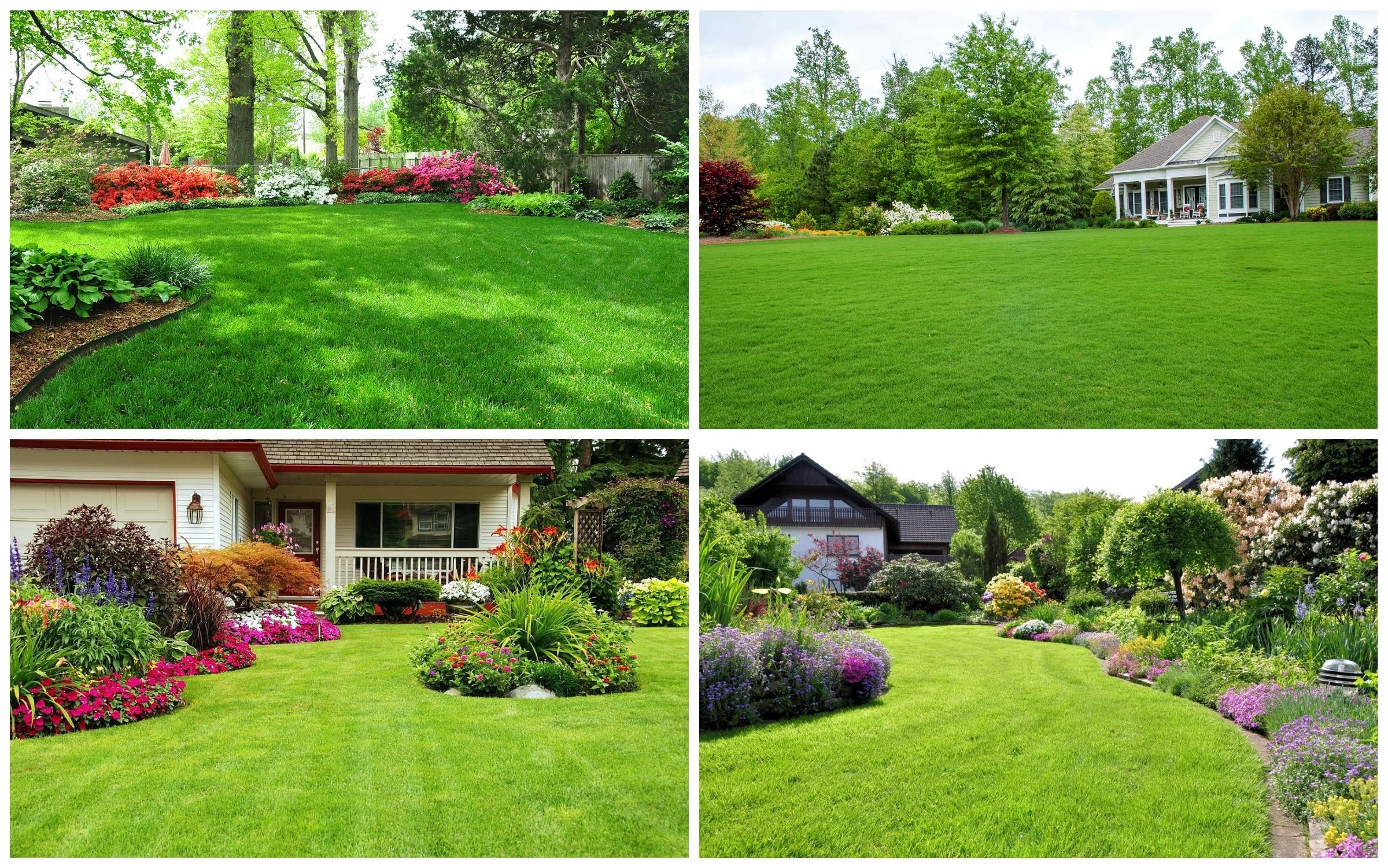 фото красивый газон