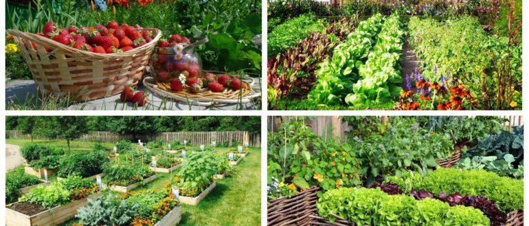 фото летний сад
