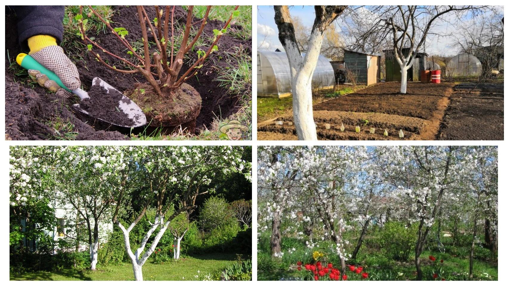 фото весенний сад