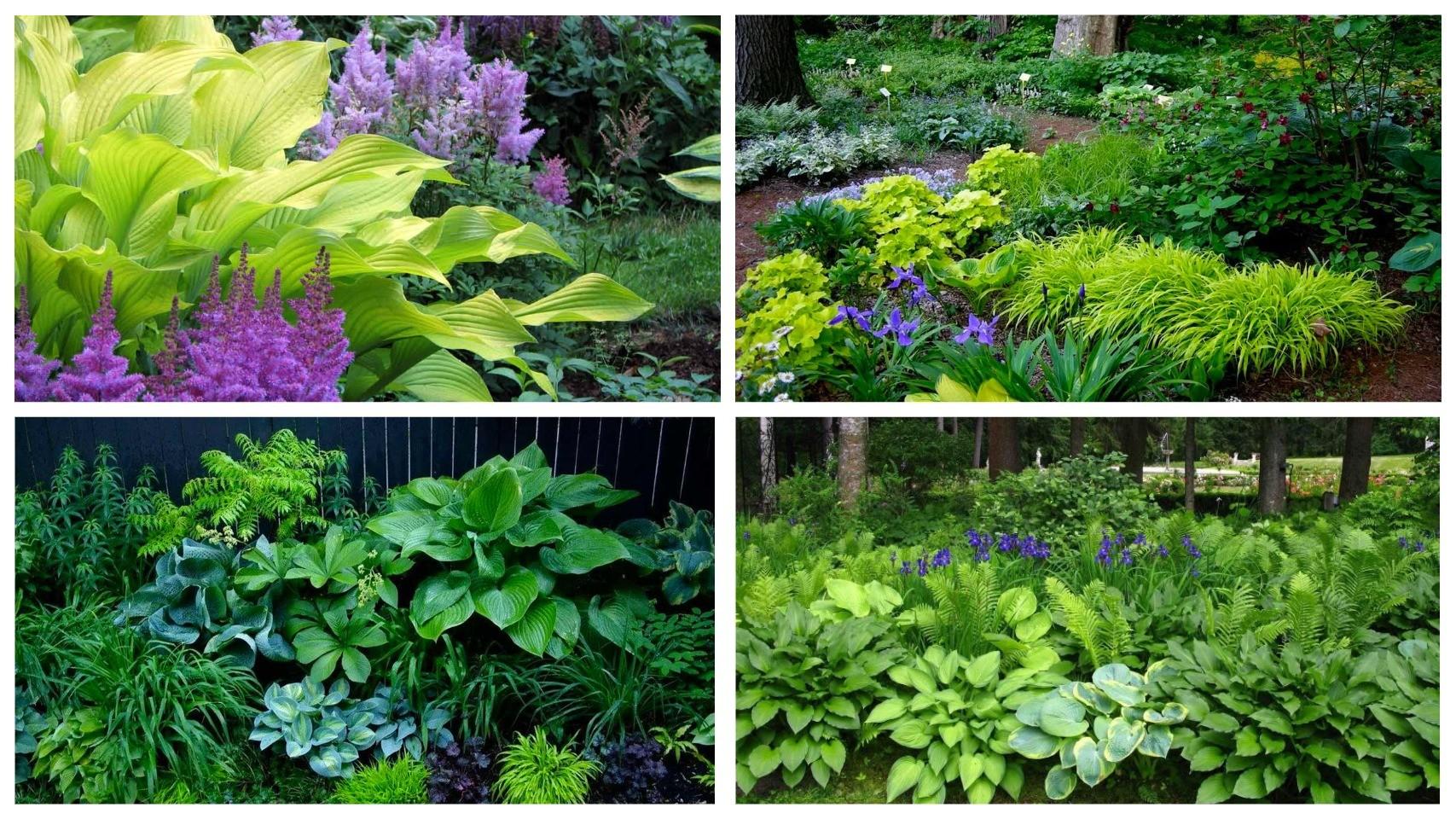 фото теневые места для растений