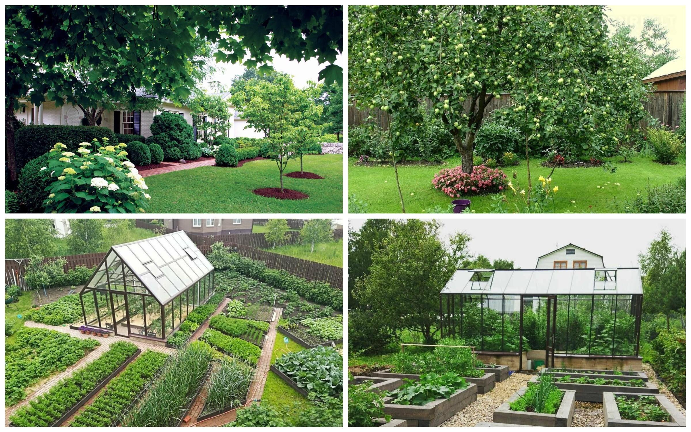 фото Сад и огород на даче