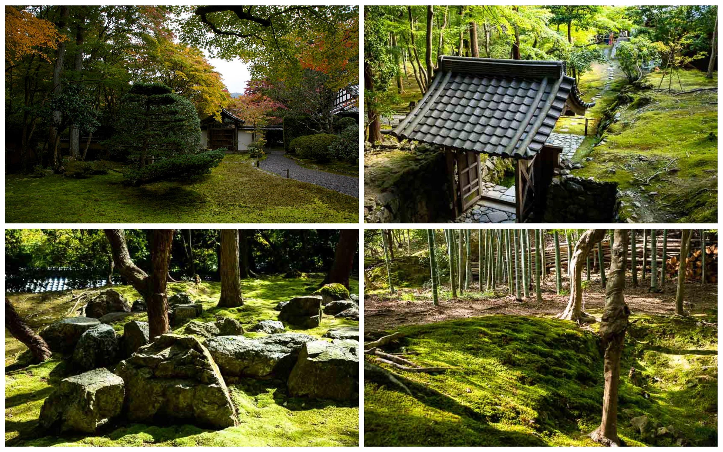 фото храм в Японии Кокедера